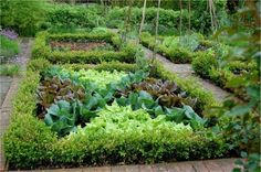 #More On Potager Gardening -- Potagers are decoratively arranged gardens, whether they be floral or vegetable.  This is a great example of a lettuce potager.