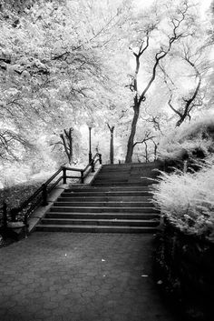 Steps, Central Park, NY  by Kelly Fitzgerald