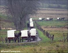 Nebraska Amish are unique in their use of white-top carriages.