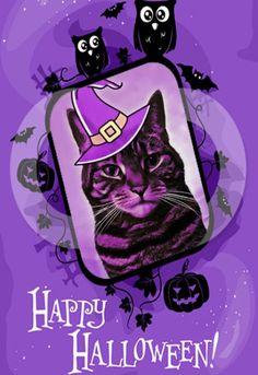 Caturday Halloween