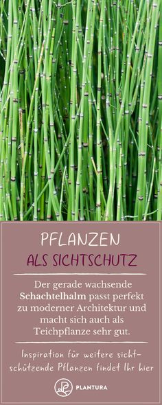 Plants as privacy: Our top 15 for garden & balcony - Plantura Artikel - Garten Balcony Privacy, Privacy Plants, Balcony Plants, House Plants, Balcony Garden, Garden Plants, Balcony Ideas, Vegetable Garden, Potager Palettes