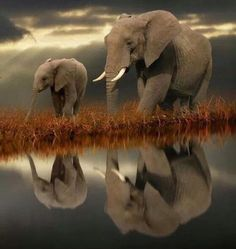 goo.gl/LmZ6h4 | Cute Photo of Mother & daughter... I <3 Elephants and you should too!