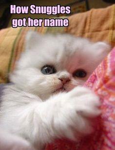 44b0245f67c9786317ade0559e53c466 white kittens sweets 19 white cat memes white cat meme, white cats and meme