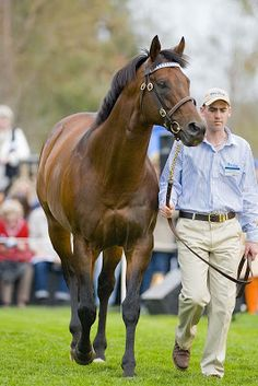 This is Sepoy's sire, the American stallion Elusive Quality.   He's also the sire of Kentucky Derby and Preakness hero Smarty Jones
