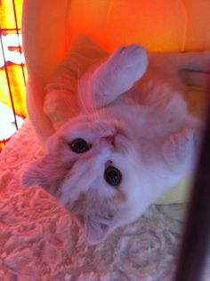 【画像】うちのブサ猫のヌードショーwwwwwwwwwwww