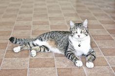 """""""Nina"""" el Gato"""