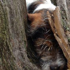 heididahlsveen:  Pass nesa #atsjoo #hund #dog #puppy #valp #hvaler (ved Listranda)