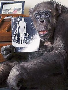 Cheetah remembering his role with Johnny. The famous chimp died at age 80 Dec 28, 2011