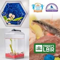 Low Maintenance Froggy's Lair Wins Holiday 2020 Honor From The National Parenting Center & A Nod From 2020 National Parenting Products Awards Dwarf Frogs, Awards, Parenting, African, Homes, Holiday, Products, Houses, Vacations