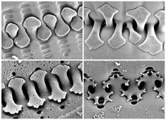 Patterns In Nature, Textures Patterns, Structural Biology, Fractals In Nature, Macro And Micro, Electron Microscope, Inventions, 3d Printing, Beauty
