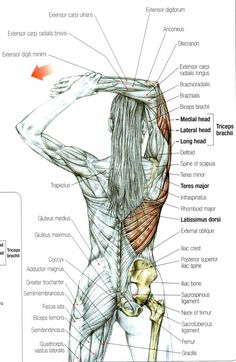 Stretching The Tricep Muscle - important when doing heavy lifting to help avoid tears of the long head of the triceps
