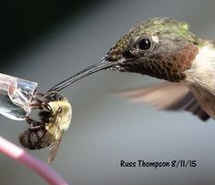 Share & share alike! Look closely for the bee's tongue and the hummingbird's tongue - both in the sugar water.