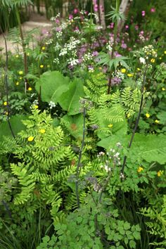 Delicate combinations of thalictrum, persicaria, valeriana, marsh marigold, and royal fern. Good selection of ferns available in the UK from Fernatix.