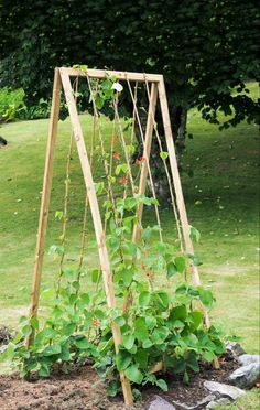 How to build a folding A-shaped climbing bean frame, full step by step guide. - How to build a folding A-shaped climbing bean frame, full step by step guide. Extract from Build A Better Vegetable Garden by Joyce and Ben Russell Raised Vegetable Gardens, Vegetable Garden Planning, Veg Garden, Garden Trellis, Garden Beds, Vegetable Gardening, Balcony Garden, Organic Gardening, Home Vegetable Garden Design
