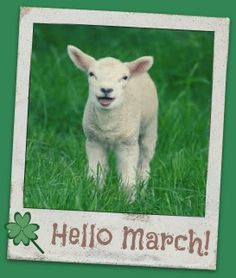 Lamb- is a baby sheep. Domestic sheep are usually smaller then wild sheep. These guys have crimped hair called wool, that we use for several things. Cute Baby Animals, Farm Animals, Funny Animals, Nature Animals, Baby Sheep, Sheep And Lamb, Lamb Pictures, Animal Pictures, Cute Lamb