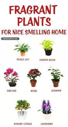 Fragrant houseplants for a nice smelling home. We all know the importance of plants. They give us fresh air to breath and we all know it very well, yet many avoid planting at home. Container Gardening, Gardening Tips, Organic Gardening, Indoor Gardening, Indoor Planters, Gardening Shoes, Texas Gardening, Gardening Services, Gardening Supplies