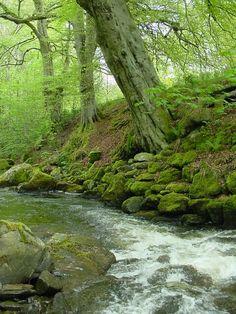 The Birks O Aberfeldy, Scotland - Photograph at BetterPhoto.com