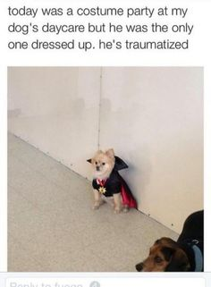 funny animal memes instagram - Google Search