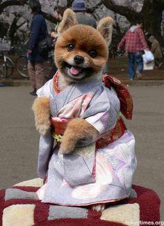 Kawai dog