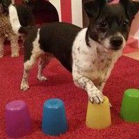 Becher- Gedächtnistraining für Hunde , von corinna