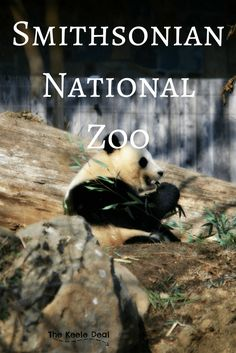 Visiting the Smithsonian National Zoo in Washington DC is a fun day trip for the whole family. Here is the story about our trip to the zoo and a few tips for visiting the Zoo with kids.