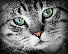 Gato, Animales, Retrato De Animal