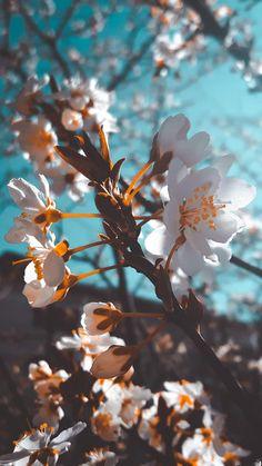 Wallpaper Nature Flowers, Beautiful Flowers Wallpapers, Flower Phone Wallpaper, Beautiful Nature Wallpaper, Cute Wallpaper Backgrounds, Pretty Wallpapers, Aesthetic Iphone Wallpaper, Lock Screen Wallpaper, Wallpaper Quotes