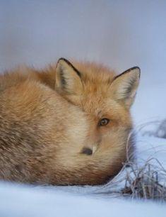 Untamed Xl Fox Tail Anal Plug From Naughty Boy Health Care Health & Beauty