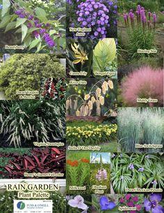 South Carolina Rain Garden Plant Palette From Clemson Extension.