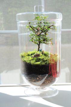 I love the idea of growing a bonsai inside a glass case.