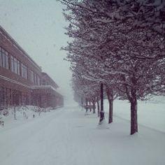 Morning snow in Corvallis.