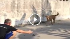 This Man Sees A Stray Dog, But What He Does Next Will Have You In Tears.