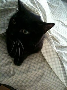 This might seem a bit silly, but this is my cat, Taylor. A very odd but sweet DSH boy who had many, many health problems.  At the age of 12.5 years old, I made the decision to put him to sleep on Tuesday July 5th, 2011. I miss my sweet Taylor cat more than I can even put into words, and I don't want him to be forgotten.