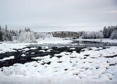 Winter Wonderland in Slagnäs, Northern Sweden. Photo by Alecia Viklund (Arctida)