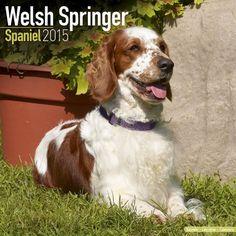Welsh Springer Spaniel Calendar - Just Welsh Springer Spaniel Calendar - 2015 Wall calendars - Dog Calendars - Monthly Wall Calendar by Avonside by MegaCalendars http://www.amazon.com/dp/1782082476/ref=cm_sw_r_pi_dp_sKViub178ET57