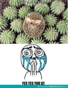 Ninja Hedgehog