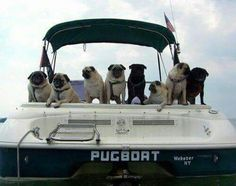 Love a pug and come check out pugs for life yotube channel. Please pin and follow me and check out my other boards.