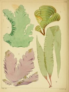 A popular history of British sea-weeds, - Biodiversity Heritage Library. http://biodiversitylibrary.org/page/4851311. #WorldOceansDay