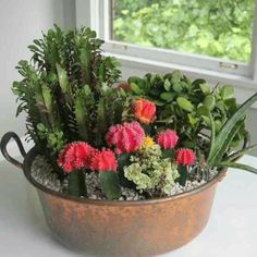 Home depot kitchen table centerpiece. ..cactus