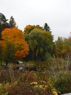 Outdoor Fall Photos