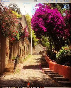 15 Instagram-Worthy Things in San Miguel de Allende, Mexico – NomadWomen