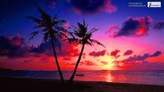 Beach Sunset Wallpaper, Gateway Arch, Pink Beach, Google Images, Drawings, World, Outdoor, Starbucks, Sunset Wallpaper