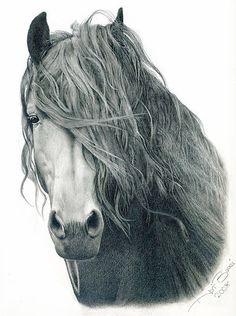 10 splendidi disegni a matita. 10 beautiful drawings in pencil.