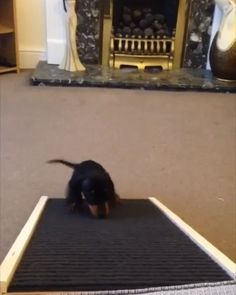 8 Awesome Dachshund Dog Ramp Images In 2019