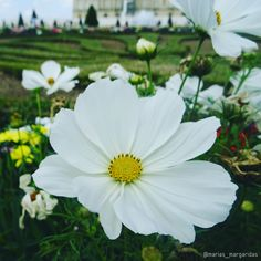 Passionate about plants and addicted to taking pictures of this beautiful ❤ . Taken by: anasanches.arq Our shop: laschicas.atelie #paris #frança #francia #france #versailles #jardindeversailles #palaciodeversalles #branco #blanco #white #flores #flowers #flowergram #flowerlover #botanical #flowerstagram #petals #flowerslovers #floweroftheday #marias_margaridas