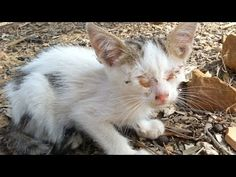 Welcome everyone I am trying to convey the suffering of stray cats, especially kittens. Just help us by subscribing and sharing the videos without forgetting. Cute Kitten Gif, Kittens Cutest, Cats And Kittens, Cute Cats, Kitten Care, Dog Pictures, Animal Kingdom, Blinds, Dog Cat