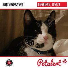 Cette Alerte (205478) est désormais close : elle n'est donc plus visible sur la plate-forme Petalert Suisse. L'animal a pu être remis à son propriétaire Merci pour votre aide. Visible, Aide, Cats, Switzerland, Thanks, Shape, Dog, Animaux, Gatos