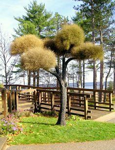 Living Tree Art - Referance Tree 27
