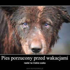 Brown Bear, Sad, Dogs, Cute, Animals, Sweet, Education, Twitter, Google