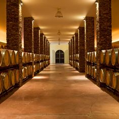"""Na herdade dispomos de visitas à adega, associadas à prova dos vários vinhos """"Herdade dos Grous"""".  Contacte-nos e reserve a sua visita!  Para informações e reserva: info@herdade-dos-grous.com +351 284 960 000  #wine #vinho #adega #herdadedosgrous #tour #hotel #alentejo #portugal #winelovers"""